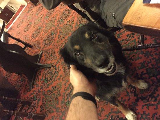 Llanwrtyd Wells, UK: another friendly doggo!