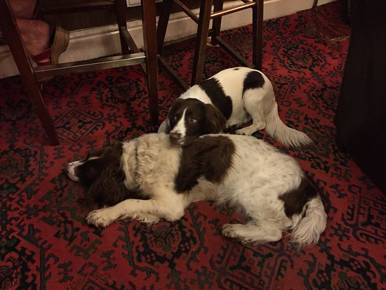 Llanwrtyd Wells, UK: Lovely doggos - father & daughter!