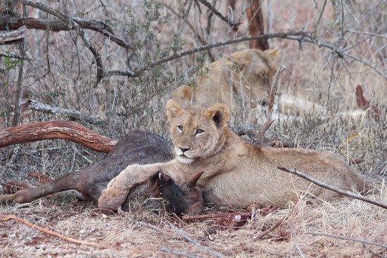 Pongola, Sudáfrica: Safari