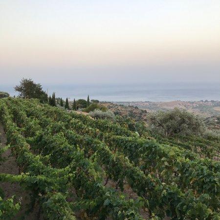 Badolato, Italie : The wineyards