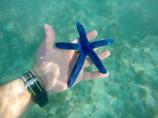 Beachcomber Island, Fiji: photo7.jpg