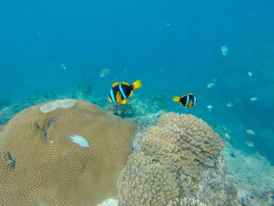 Beachcomber Island, Fiji: photo8.jpg