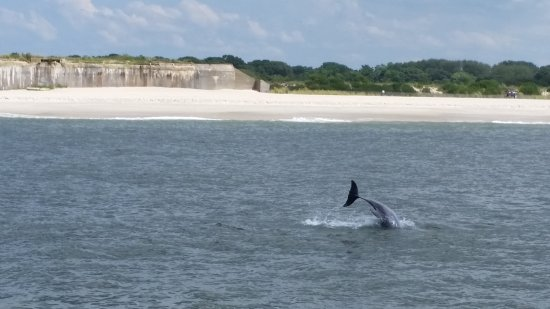 Cape May Whale Watch & Research Center: 20170810_111914_large.jpg