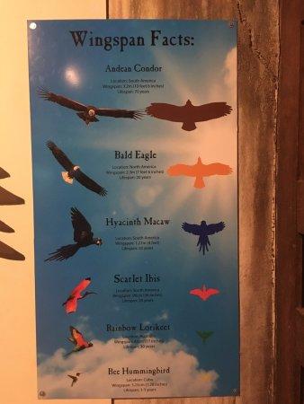 this guy had no fear and follows you around photo de bird kingdom
