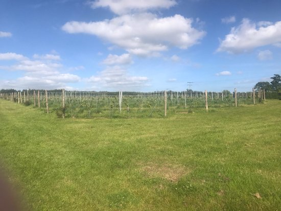 Topsham, UK: Pebblebed Vineyard