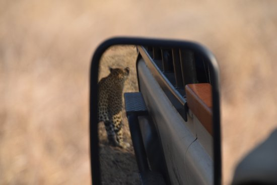 Ulusaba Private Game Reserve, Güney Afrika: It's behind you