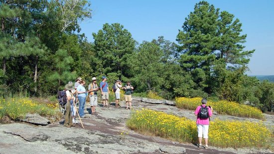 Stockbridge, GA: Guided hike- the only way to the top!