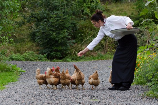 Fusa Municipality, Norvegia: Our chef and her keen providers of fresh eggs