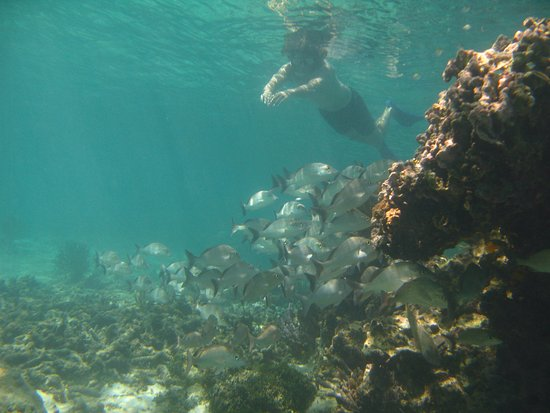 Snorkeling In Soliman Bay Mexico Picture Of Soliman Bay Tours