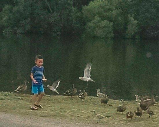 Pirateland Oceanfront Campground: feeding the birds