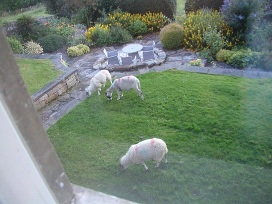 Danby, UK: Sheep in the garden!