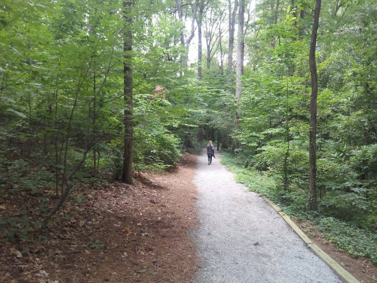 Dunwoody, جورجيا: Rear Exterior Wooded Walking Trails