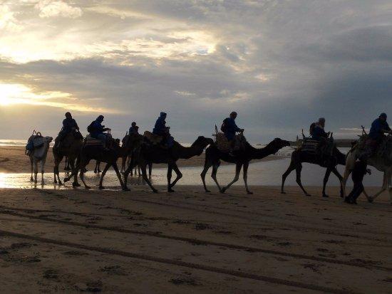 Essaouira Beach: camel ride