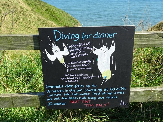 fun facts - Picture of RSPB Bempton Cliffs, Bempton - TripAdvisor
