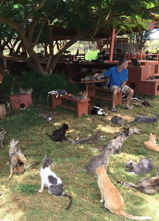 Lanai City, Havai: Some of the sanctuary residents