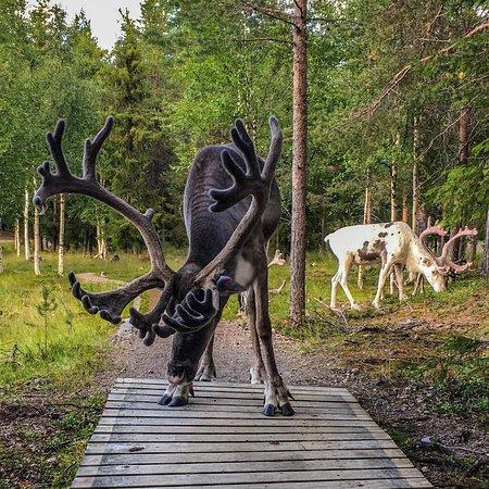 Arjeplog, Schweden: Batsuoj Samecenter