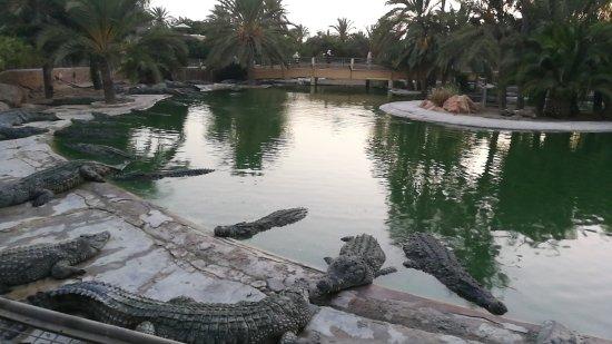 Midoun, Tunisia: IMG_20170811_190601_large.jpg
