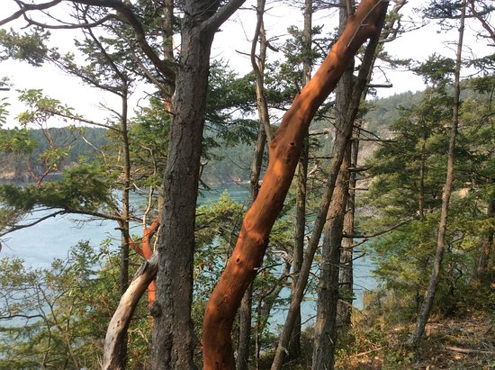 Oak Harbor, Waszyngton: View from north beach trail to Deception Pass Bridge