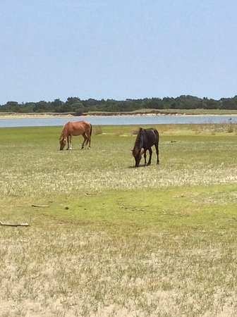 Beaufort, NC: Shackleford Banks wild horses