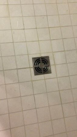 State College, PA: Dingy tile and grout around shower drain.