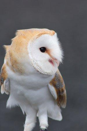 Blackford, UK: Owls