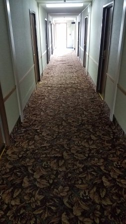 Marinette, WI: Hall carpet