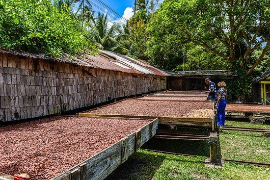 Fond Doux Plantation & Resort's Heritage Tour