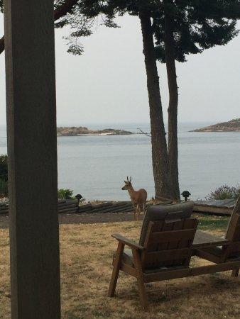 Galiano Island Photo