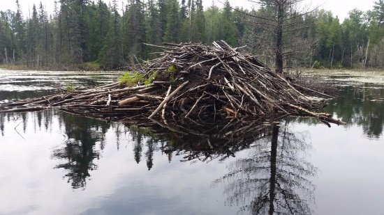 Temagami 사진
