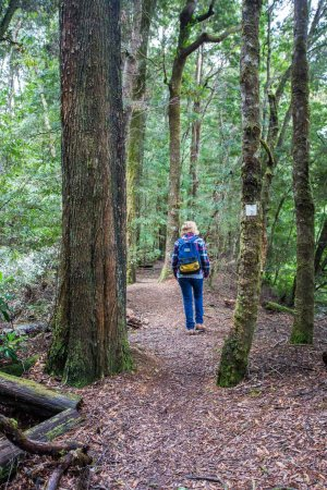 Corinna, Australia: Self-guided walks through the Tarkine