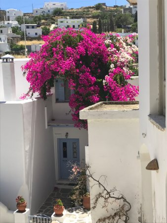 Lefkes: pretty flowers and scenery