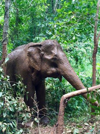 Sen Monorom, Kambodja: photo2.jpg