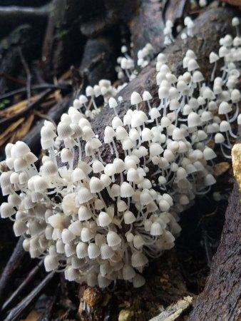 Piedras Blancas, Costa Rica : photo4.jpg