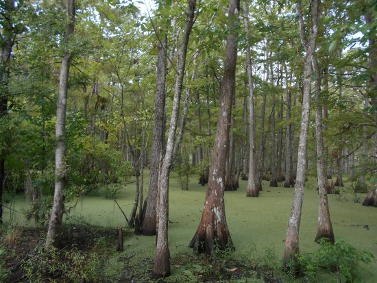 Gibson, Luizjana: The swamp>