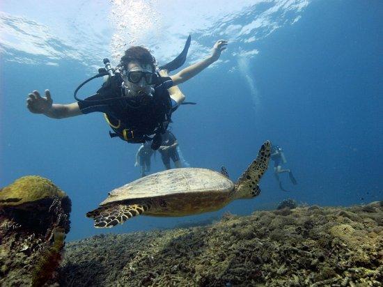 Gili Air, Endonezya: How big was that sea turtle?