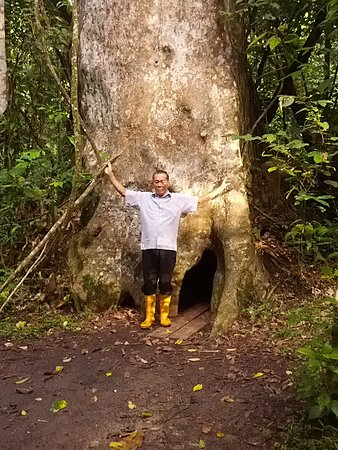 Сукау, Малайзия: Kinabatangan Jungle Camp
