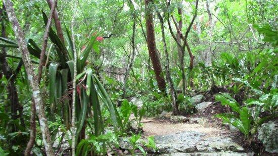 Yucatan Resmi