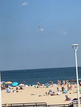 Hampton State Beach: photo6.jpg