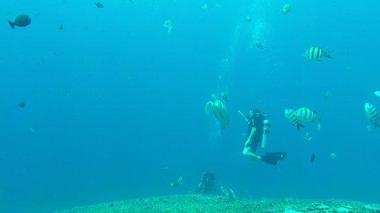 Gili Air, Endonezya: Aina having a near encounter with a friendly turtle