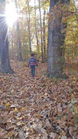 Hartford, WI: Crunchy leaves