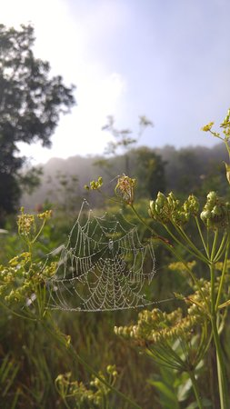 Hartford, WI: Dewy early morning in the meadow