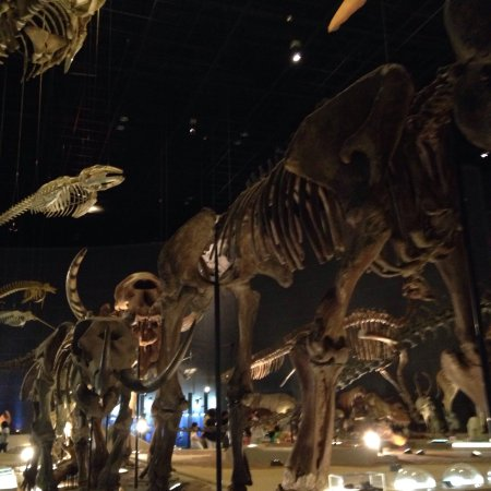 Kanagawa Prefectural Museum of Natural History: photo2.jpg