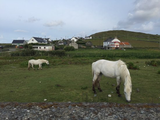 Doonmore Hotel : Horses that stay right next to the hotel