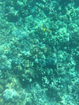 Kealakekua, HI: Snorkeling the reef near the Capt. Cook Monument