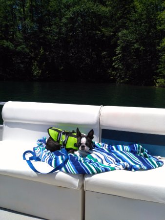 Almond, NC: Our little guy chilling on the boat after getting into the water.