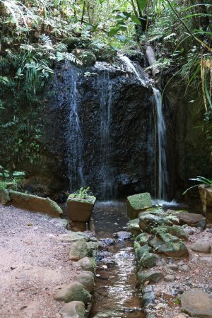 Mena Creek, Australië: Paronella Park - Teresa Falls