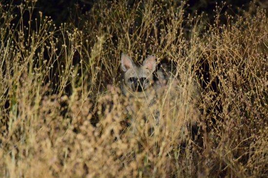 Tswalu Kalahari Game Reserve, Sudáfrica: Tswalu Kalahari - Aardwolf