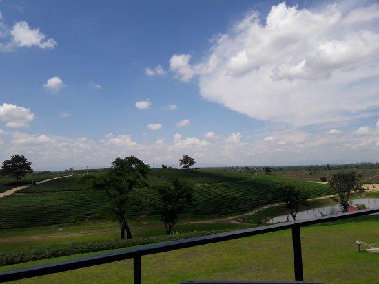 Choui Fong Tea Plantation: 20160623_133907_large.jpg