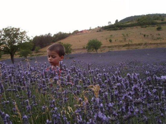 Chamaloc, France: Dans un champ de Lavandes...