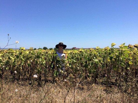 The Vineyards Resort: photo7.jpg